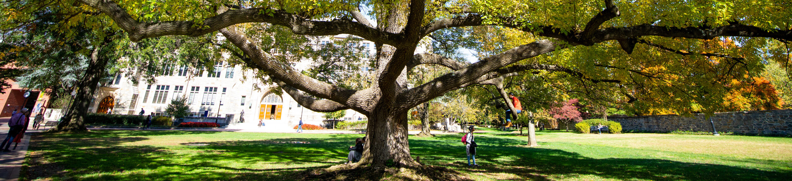 The tree on Copley Lawn at Georgetown University